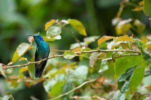 14_Colibri-Costa-Rica